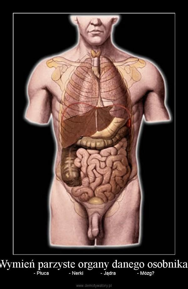 Wymień parzyste organy danego osobnika: – - Płuca               - Nerki             - Jądra                - Mózg?