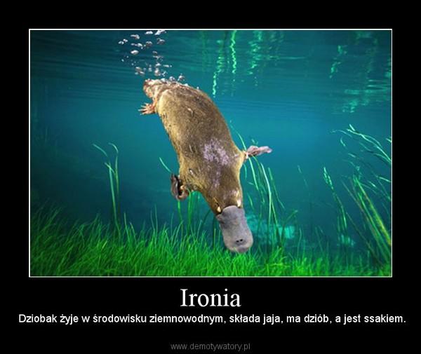 Ironia –  Dziobak żyje w środowisku ziemnowodnym, składa jaja, ma dziób, a jest ssakiem.