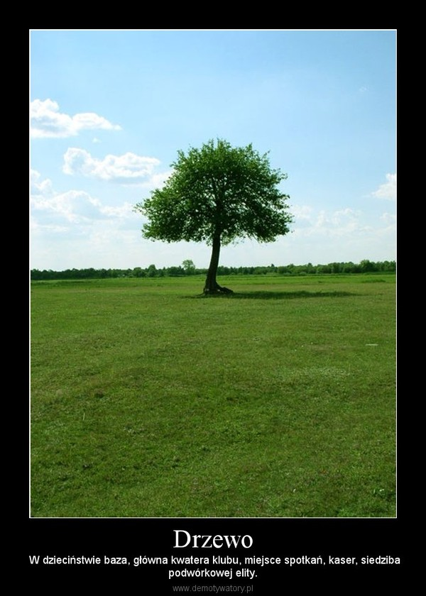 Drzewo –  W dzieciństwie baza, główna kwatera klubu, miejsce spotkań, kaser, siedzibapodwórkowej elity.