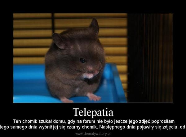 Telepatia –  Ten chomik szukał domu, gdy na forum nie było jescze jego zdjęć poprosiłammamę żebyśmy go wzięły, tego samego dnia wyśnił jej się czarny chomik. Następnego dnia pojawiły się zdjęcia, od tamtego czasu jest z nami.