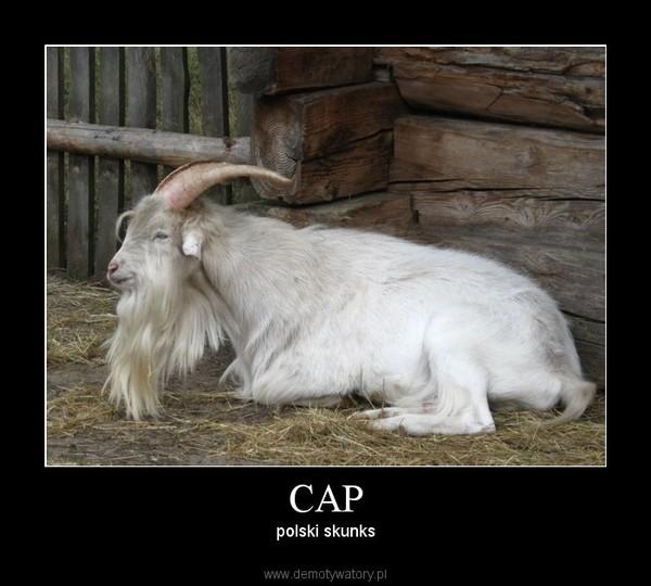 CAP –  polski skunks