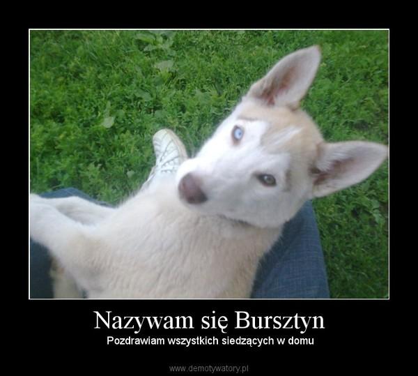 Nazywam się Bursztyn – Pozdrawiam wszystkich siedzących w domu