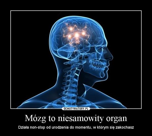 Mózg to niesamowity organ – Działa non-stop od urodzenia do momentu, w którym się zakochasz