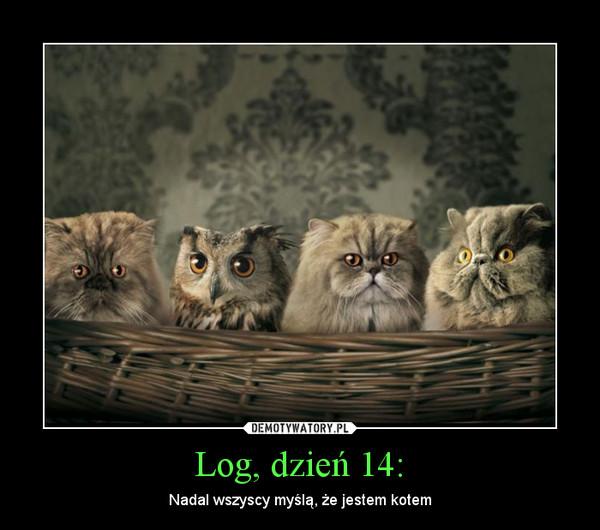Log, dzień 14: – Nadal wszyscy myślą, że jestem kotem