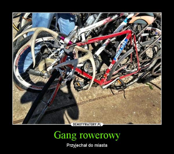 Gang rowerowy – Przyjechał do miasta