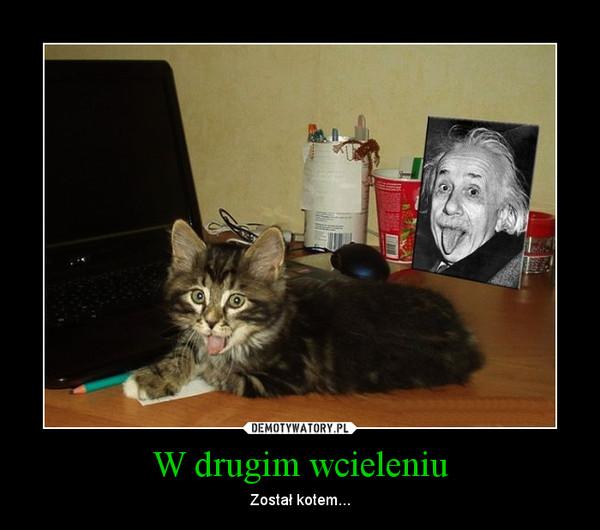W drugim wcieleniu – Został kotem...
