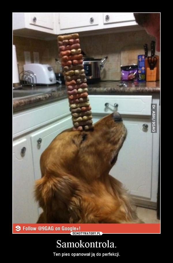Samokontrola. – Ten pies opanował ją do perfekcji.