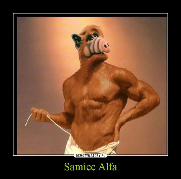 Samiec Alfa –