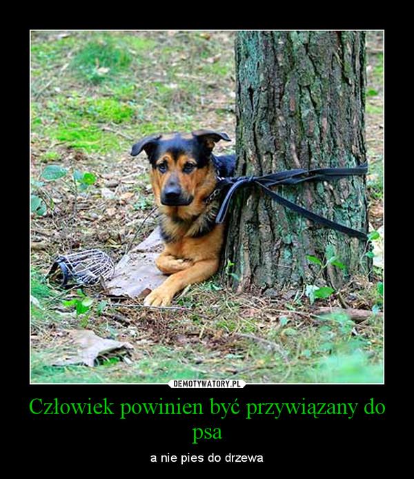 Człowiek powinien być przywiązany do psa – a nie pies do drzewa