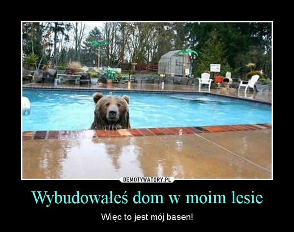 Wybudowałeś dom w moim lesie – Więc to jest mój basen!
