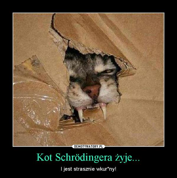 Kot Schrödingera żyje... – I jest strasznie wkur*ny!