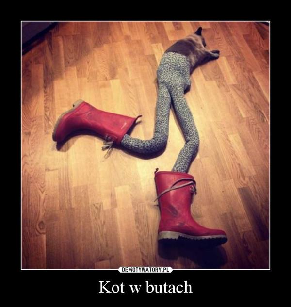 Kot w butach –