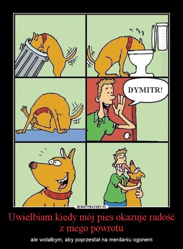 Uwielbiam kiedy mój pies okazuje radość z mego powrotu – ale wolałbym, aby poprzestał na merdaniu ogonem