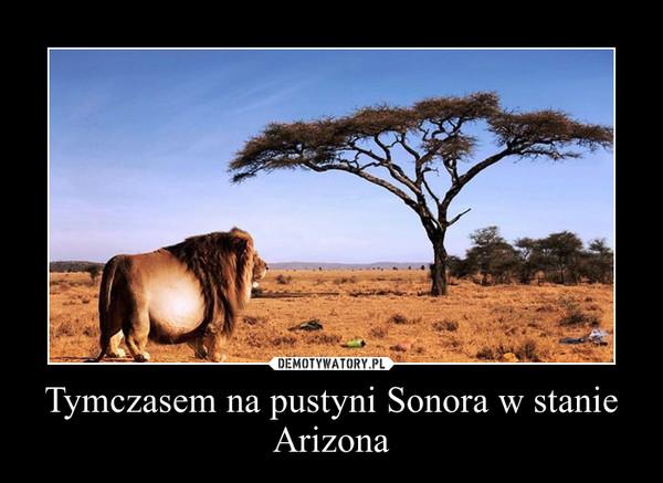 Tymczasem na pustyni Sonora w stanie Arizona –