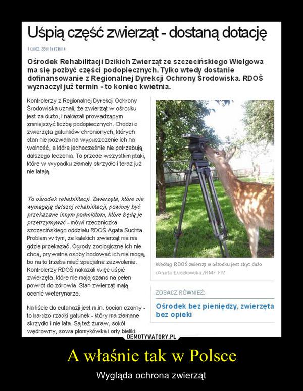 A właśnie tak w Polsce – Wygląda ochrona zwierząt