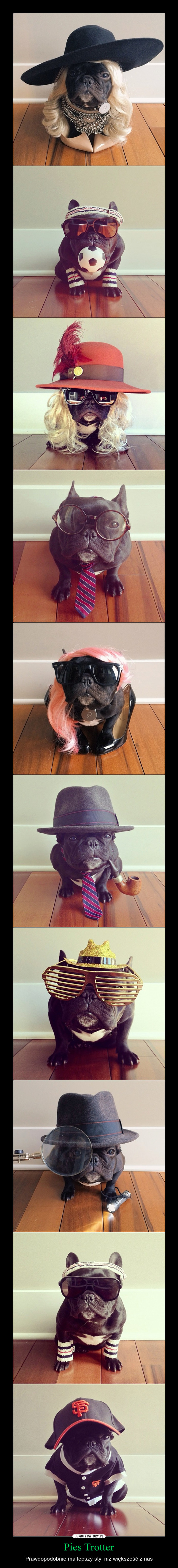 Pies Trotter – Prawdopodobnie ma lepszy styl niż większość z nas