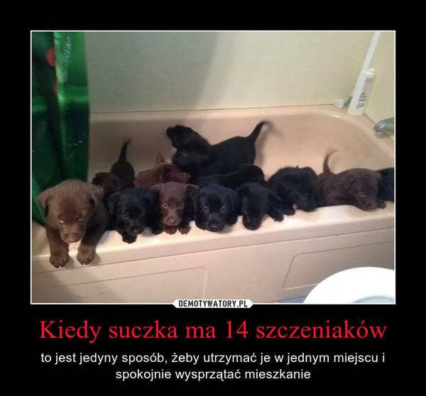 Kiedy suczka ma 14 szczeniaków – to jest jedyny sposób, żeby utrzymać je w jednym miejscu i spokojnie wysprzątać mieszkanie