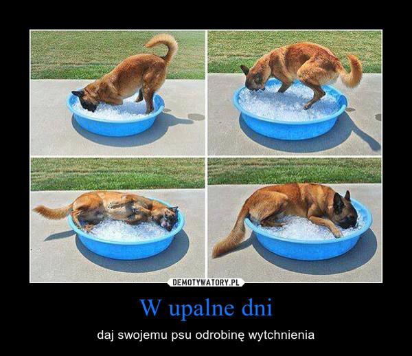 W upalne dni – daj swojemu psu odrobinę wytchnienia