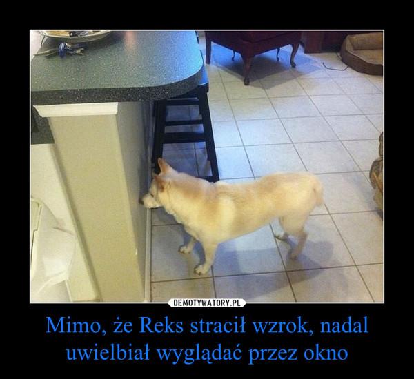 Mimo, że Reks stracił wzrok, nadal uwielbiał wyglądać przez okno –