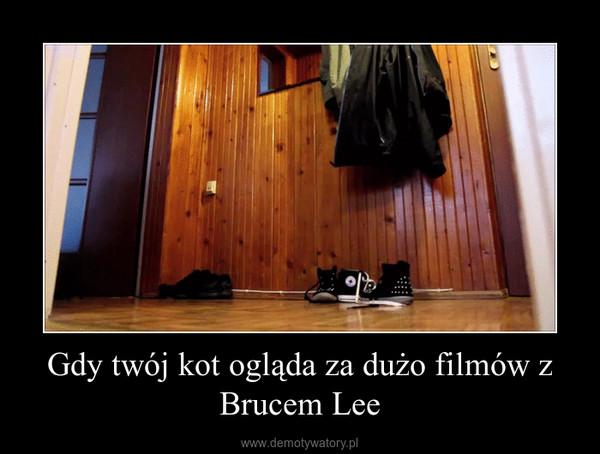 Gdy twój kot ogląda za dużo filmów z Brucem Lee –