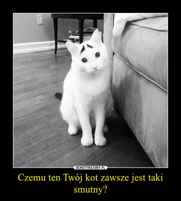 Czemu ten Twój kot zawsze jest taki smutny? –