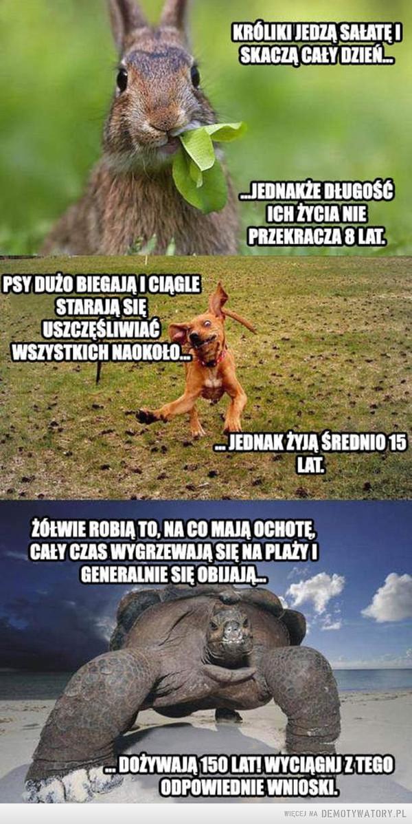 Zwierzęta i wiek –