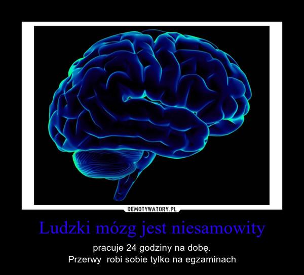 Ludzki mózg jest niesamowity – pracuje 24 godziny na dobę.Przerwy  robi sobie tylko na egzaminach