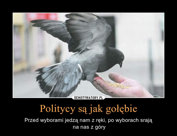 Politycy są jak gołębie – Przed wyborami jedzą nam z ręki, po wyborach srają na nas z góry