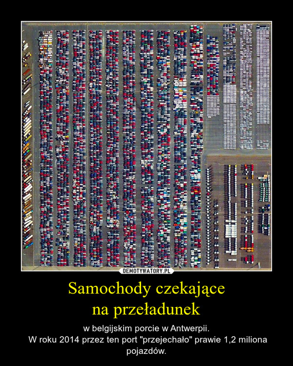 """Samochody czekającena przeładunek – w belgijskim porcie w Antwerpii. W roku 2014 przez ten port """"przejechało"""" prawie 1,2 miliona pojazdów."""