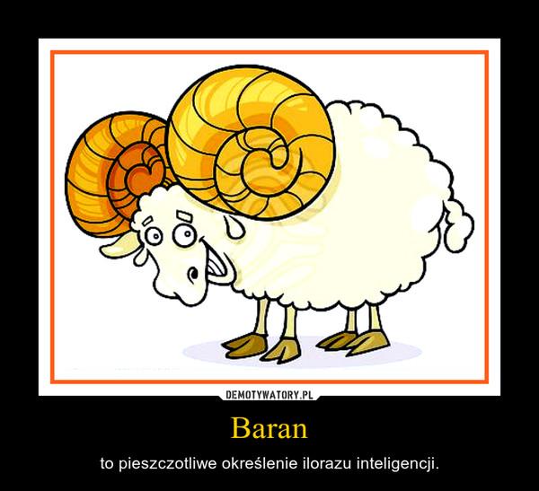 Baran – to pieszczotliwe określenie ilorazu inteligencji.
