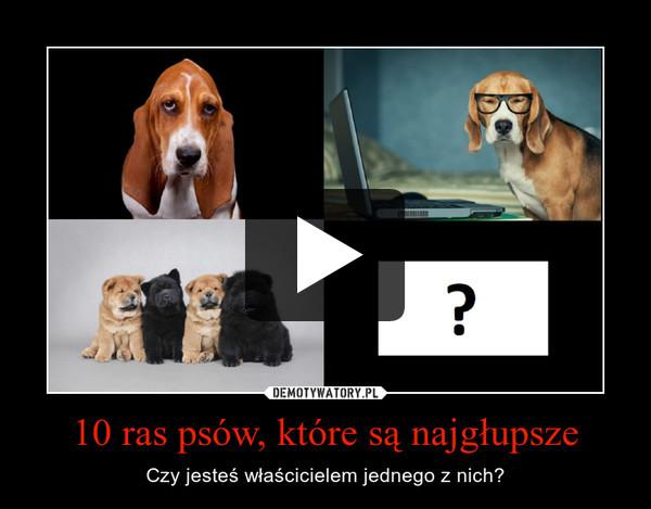 10 ras psów, które są najgłupsze – Czy jesteś właścicielem jednego z nich?
