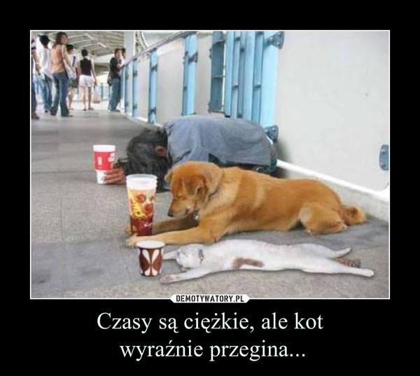 Czasy są ciężkie, ale kot wyraźnie przegina... –