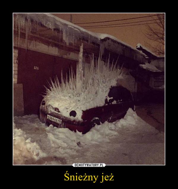Śnieżny jeż –