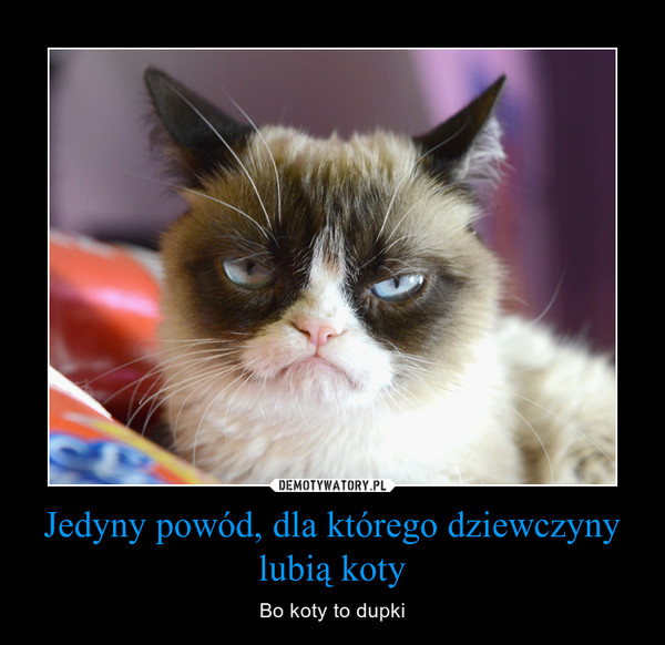 Jedyny powód, dla którego dziewczyny lubią koty – Bo koty to dupki