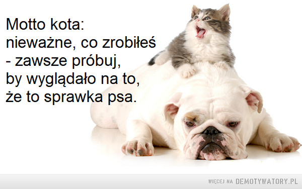 Motto kota –  Motto kota:nieważne, co zrobiłeś- zawsze próbuj, by wyglądało na to,że to sprawka psa.