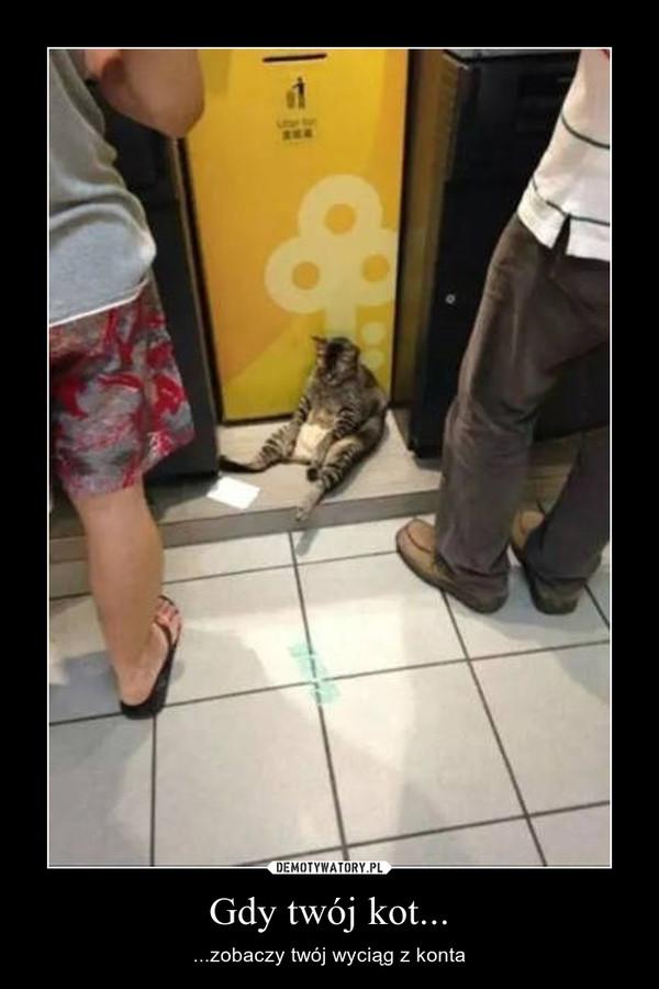 Gdy twój kot... – ...zobaczy twój wyciąg z konta