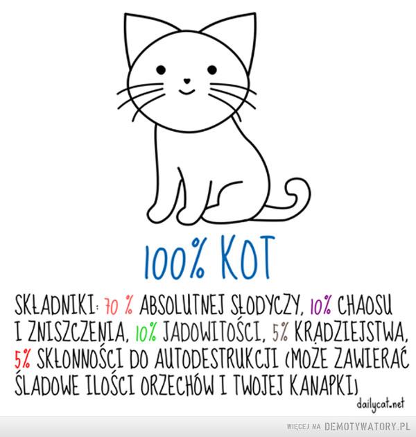Skład kota –