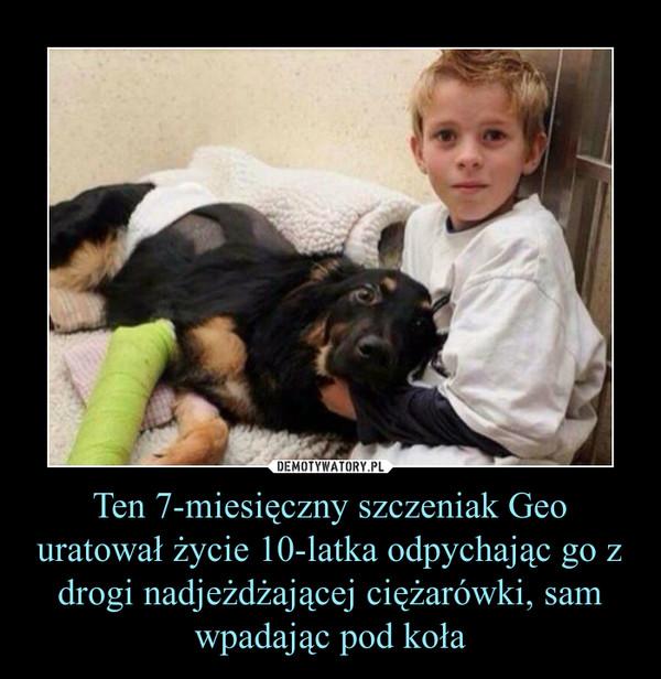 Ten 7-miesięczny szczeniak Geo uratował życie 10-latka odpychając go z drogi nadjeżdżającej ciężarówki, sam wpadając pod koła –