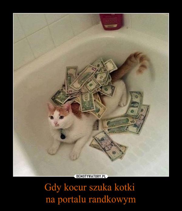 Gdy kocur szuka kotki na portalu randkowym –