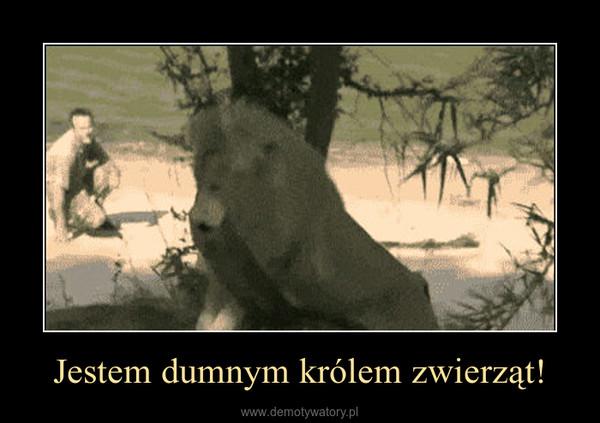 Jestem dumnym królem zwierząt! –