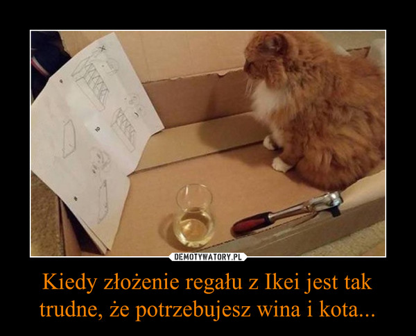 Kiedy złożenie regału z Ikei jest tak trudne, że potrzebujesz wina i kota... –