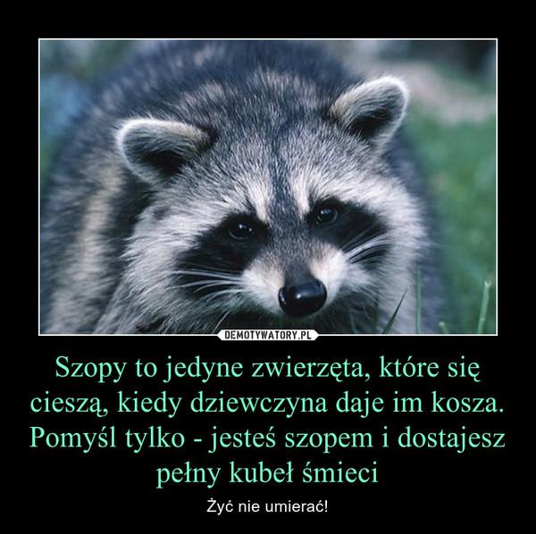 Szopy to jedyne zwierzęta, które się cieszą, kiedy dziewczyna daje im kosza. Pomyśl tylko - jesteś szopem i dostajesz pełny kubeł śmieci – Żyć nie umierać!