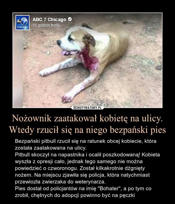 Nożownik zaatakował kobietę na ulicy. Wtedy rzucił się na niego bezpański pies – Bezpański pitbull rzucił się na ratunek obcej kobiecie, która została zaatakowana na ulicy.Pitbull skoczył na napastnika i ocalił poszkodowaną! Kobieta wyszła z opresji cało, jednak tego samego nie można powiedzieć o czworonogu. Został kilkakrotnie dźgnięty nożem. Na miejscu zjawiła się policja, która natychmiast przewiozła zwierzaka do weterynarza.Pies dostał od policjantów na imię ''Bohater'', a po tym co zrobił, chętnych do adopcji powinno być na pęczki