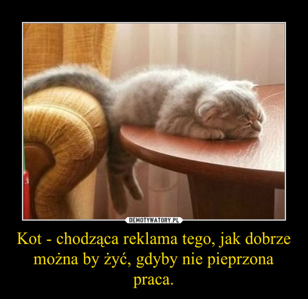 Kot - chodząca reklama tego, jak dobrze można by żyć, gdyby nie pieprzona praca. –