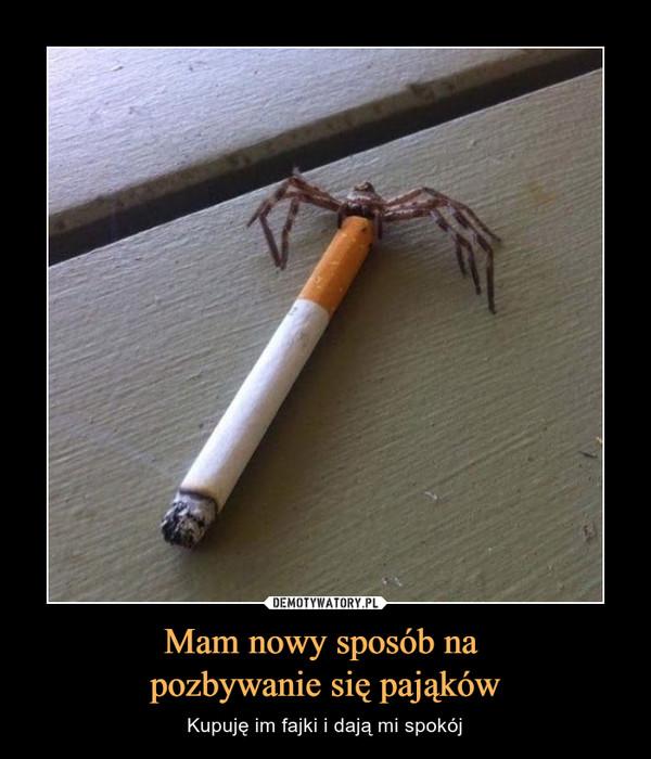 Mam nowy sposób na pozbywanie się pająków – Kupuję im fajki i dają mi spokój