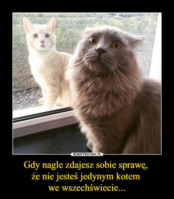 Gdy nagle zdajesz sobie sprawę, że nie jesteś jedynym kotem we wszechświecie... –