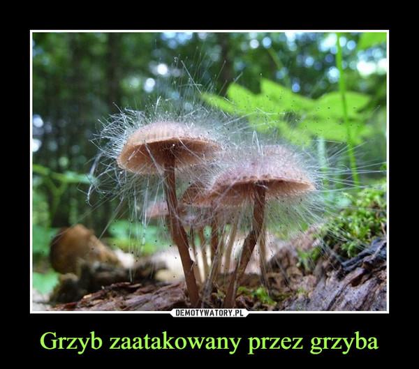 Grzyb zaatakowany przez grzyba –