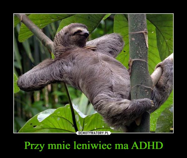 Przy mnie leniwiec ma ADHD –