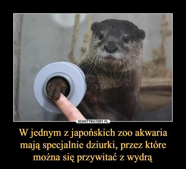 W jednym z japońskich zoo akwaria mają specjalnie dziurki, przez które można się przywitać z wydrą –