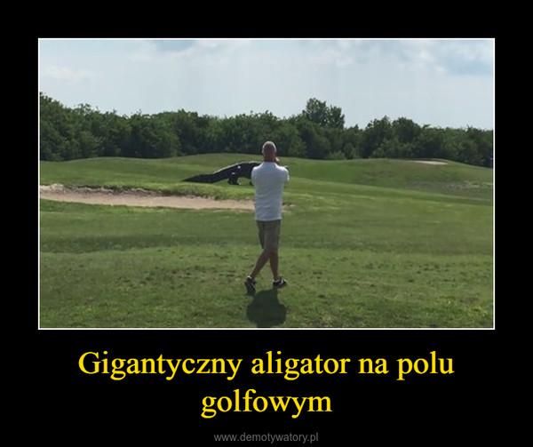 Gigantyczny aligator na polu golfowym –